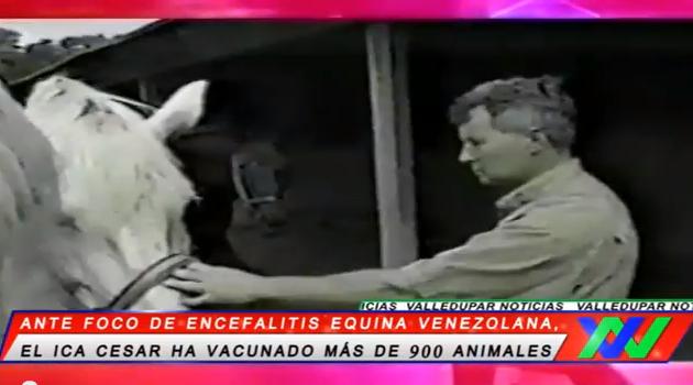 Ante foco de Encefalitis Equina Venezolana, el ICA Cesar ha vacunado más de 900animales.