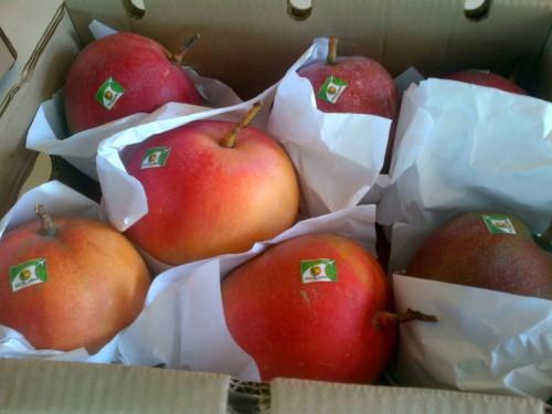 ICA acompaña a exportador de mango en la conquista del mercadoeuropeo