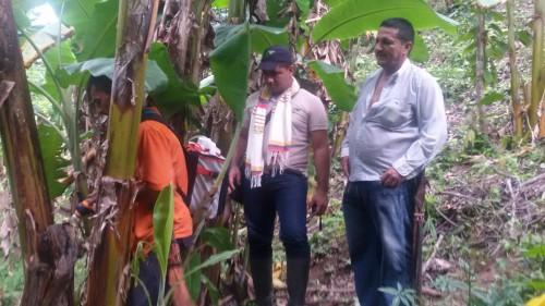Enfermedad conocida como moko afecta cultivos de plátano y banano en elCesar