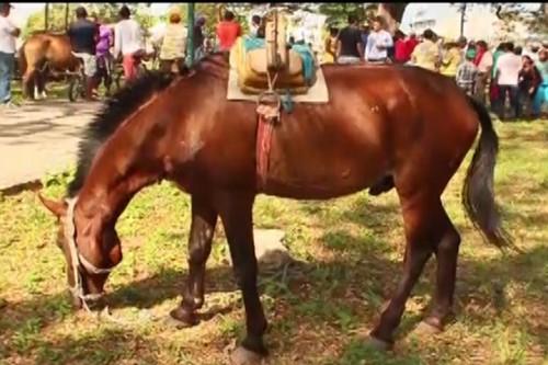 Gobernador Monsalvo planteó alternativas al gremio de carromuleros enValledupar