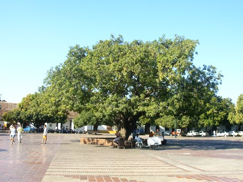 """""""Adopta un árbol"""", campaña para que Valledupar se mantenga como la Ciudad Verde deColombia"""