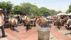 Carromuleros se toman la plaza Alfonso López0
