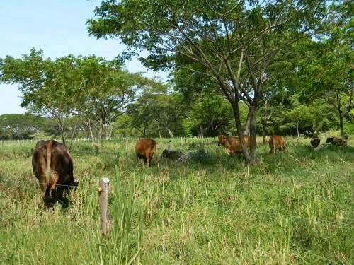 Gobierno departamental entregará alimento para ganado a pequeñosproductores