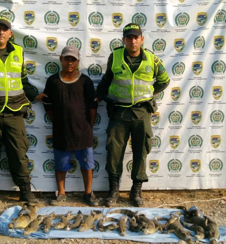 Policía capturó a hombre que llevaba 14babillas
