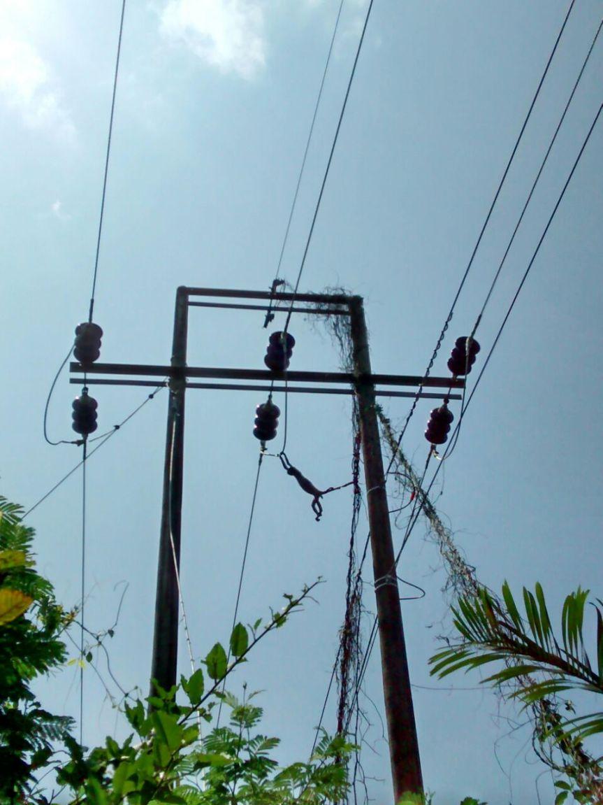 Un mico interrumpió servicio de energía en Corredorminero