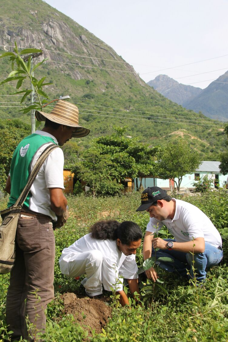 Gobierno departamental inició reforestación conindígenas