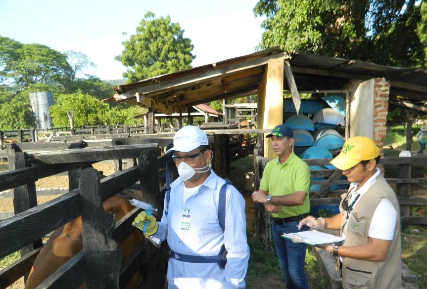 En 8 municipios del Cesar y 6 de La Guajira vacunarán contra fiebre aftosa hasta el 30 dejulio