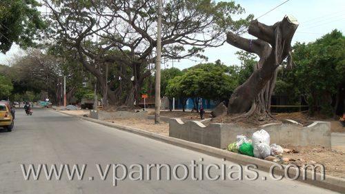Muerte de árboles en la avenida SimónBolívar