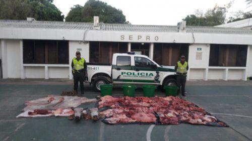 Policía incautó 1.198 libras de carne de res enMariangola