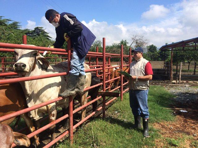 En 13 municipios del Cesar es obligatorio vacunar contra la rabiasilvestre