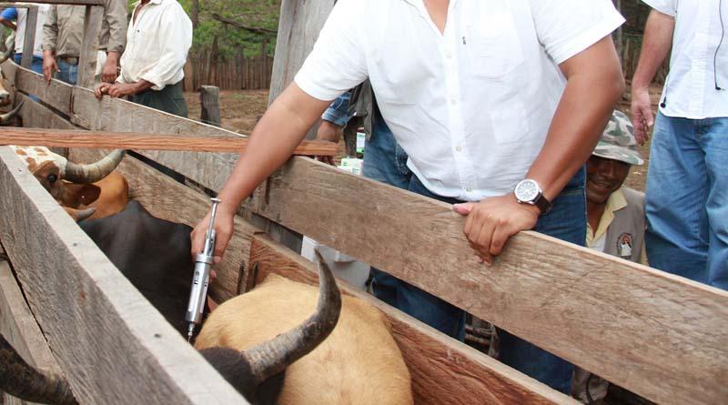 Organización Mundial de Sanidad Animal restituye al país estatus de libre de fiebre aftosa porvacunación