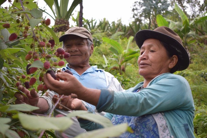 Lanzamiento regional del Decenio de la Agricultura Familiar2019-2028