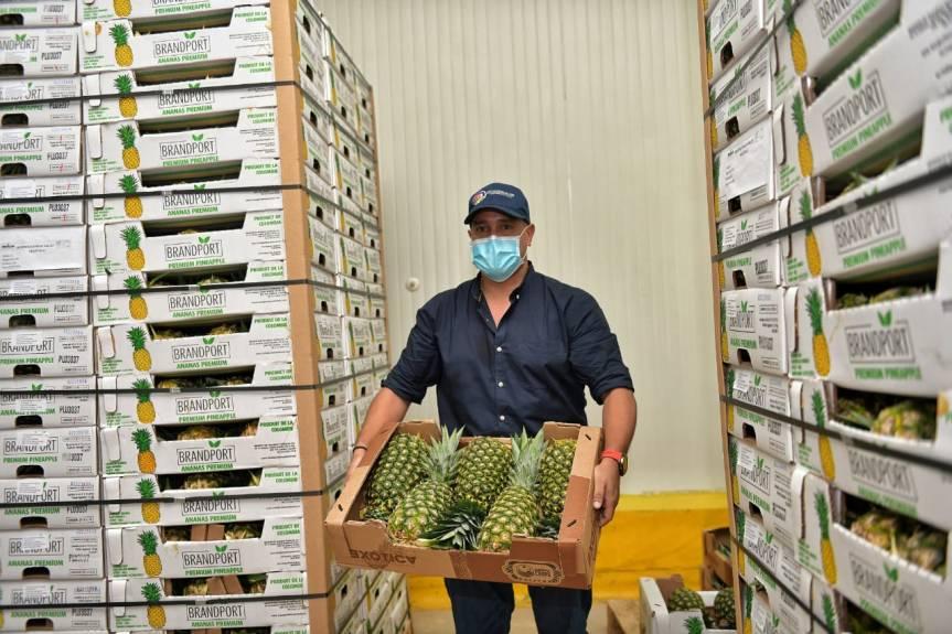 Exportación de 19 mil kilos de piña cesarense a Canadá cuenta con acompañamiento de gobiernodepartamental