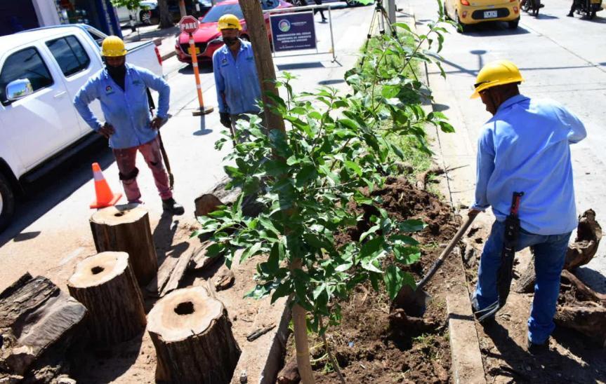"""""""Con el Plan de Arbolado hemos  intervenido más de 200 árboles en Valledupar"""": GobernadorMonsalvo"""