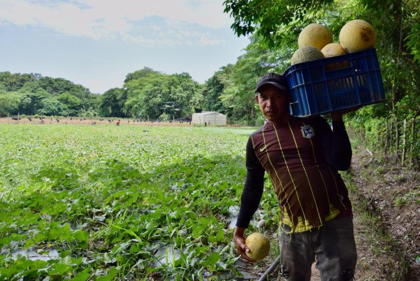 Melón y plantas aromáticas, las nuevas apuestas productivas de excombatientes en LaGuajira