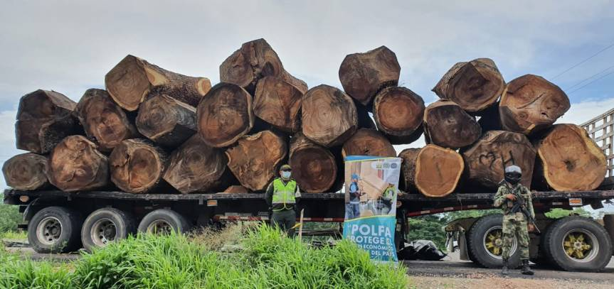 En operativo la Polfa incauta maderailegal